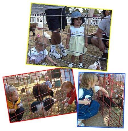 Petting zoo rental