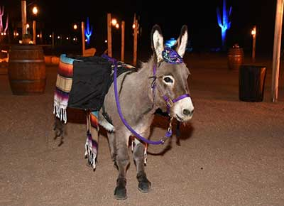 beer burough donkey